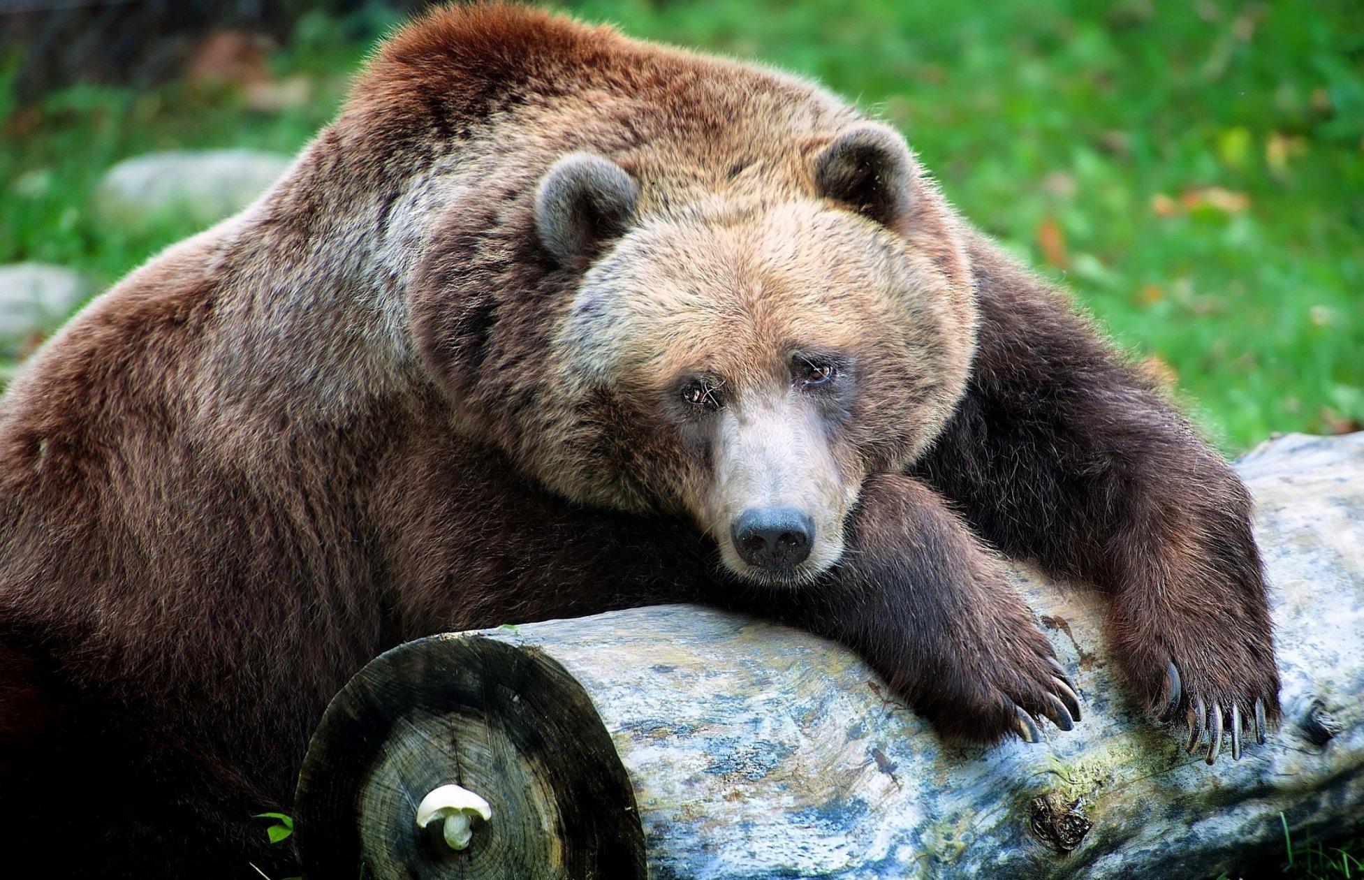 Caravellaonweb le migliori immagini fotografie di for Le migliori cabine per grandi orsi