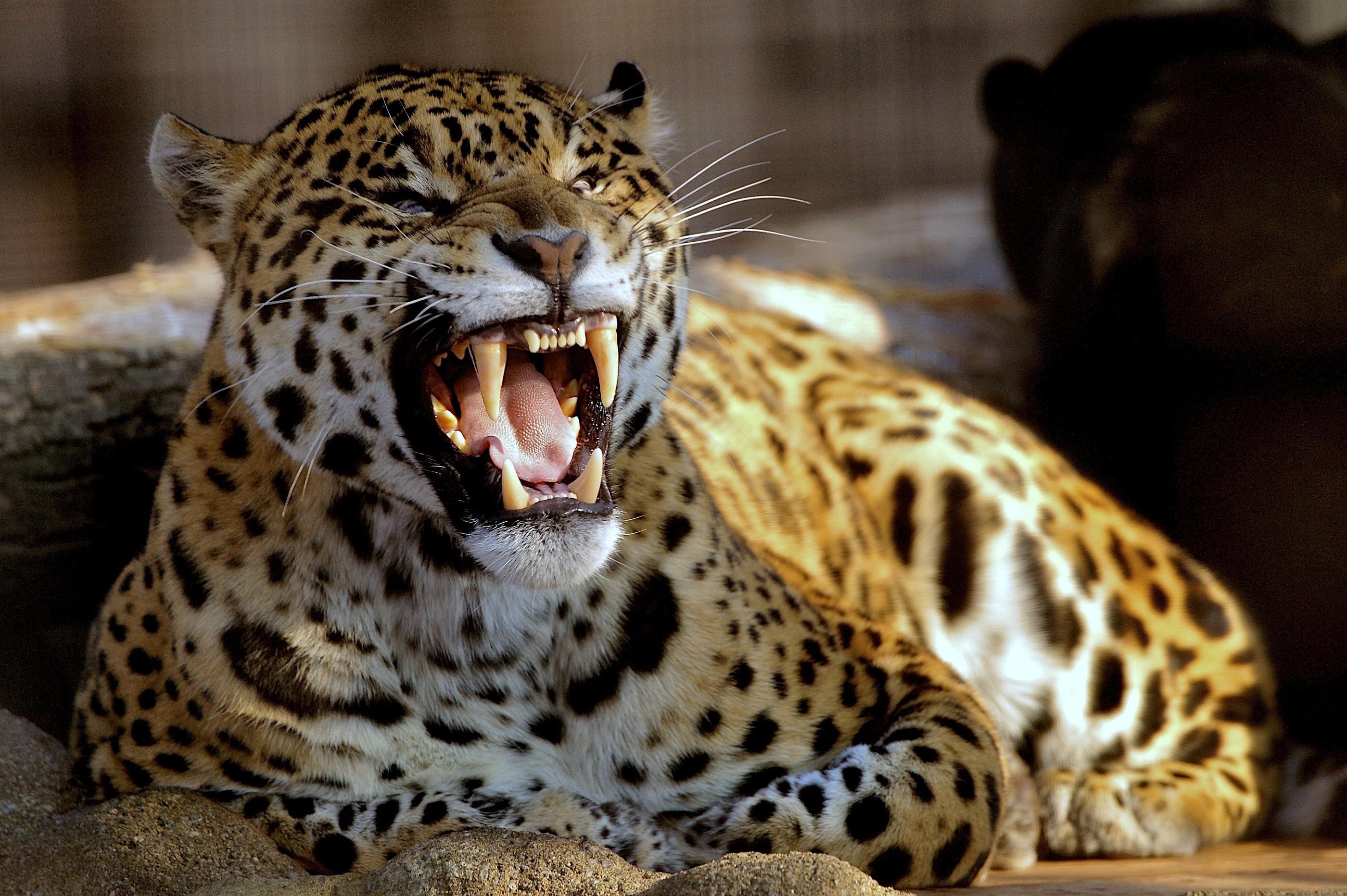 Le migliori immagini fotografie di animali in alta for Foto desktop animali