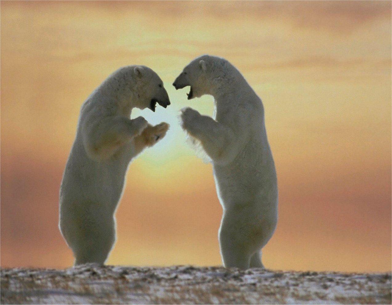 Le migliori immagini fotografie di animali in alta for Le migliori cabine per grandi orsi